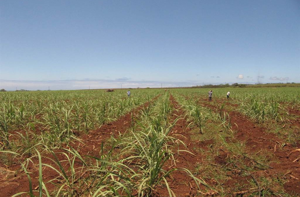 Lawsuits Have Consequences: Aloha To Hawaii Sugar