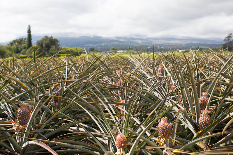 Grassroot Testimony: BF-70 (Maui Ordinance Regarding Taxation of Agricultural Land)
