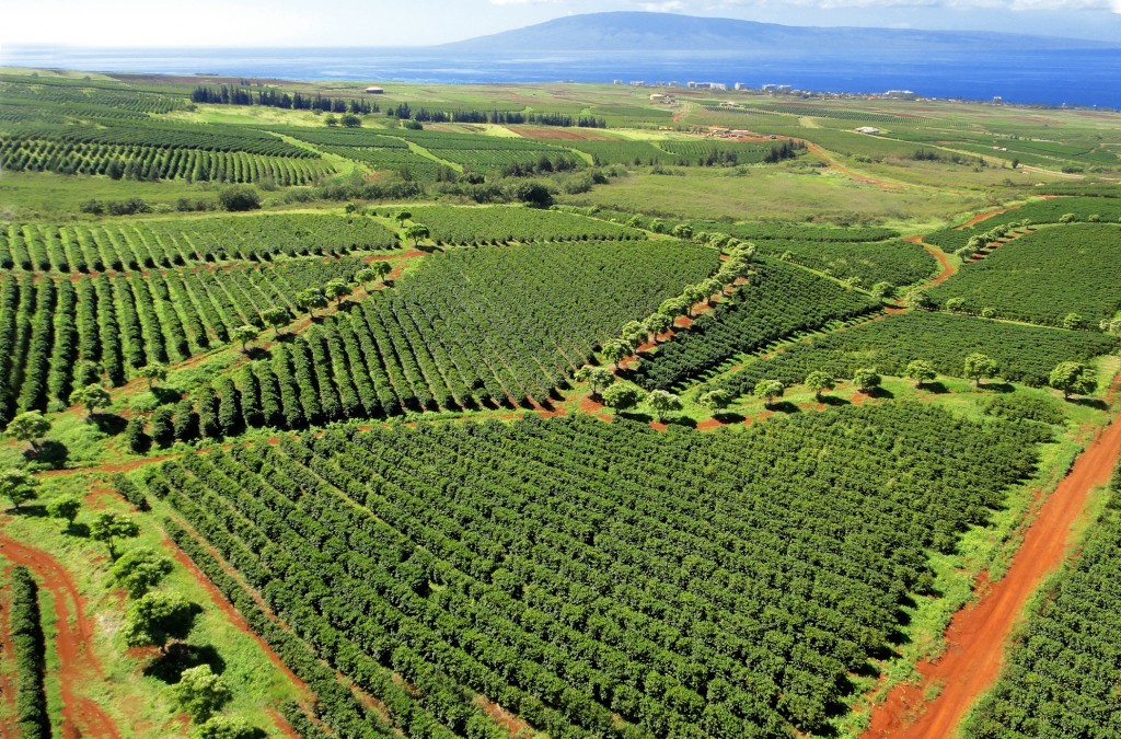 Agricultural Regulation on Maui Threatens Growth
