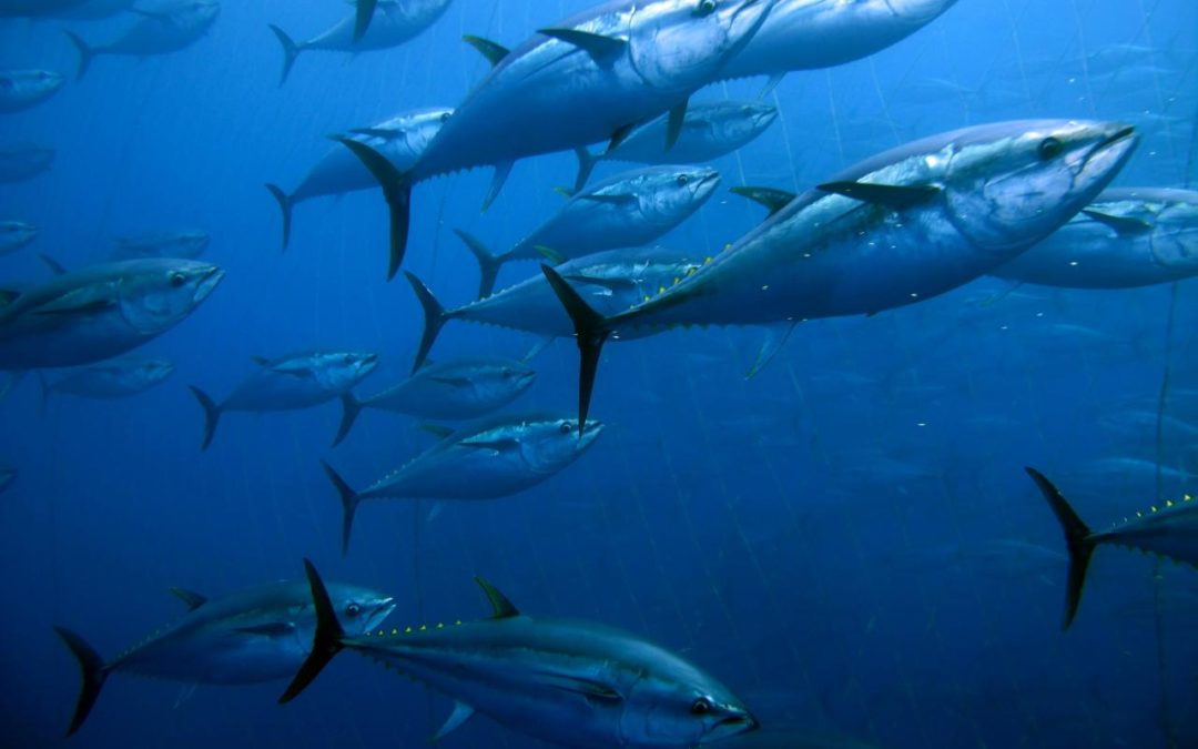Why does Hawaii keep overfishing its waters?